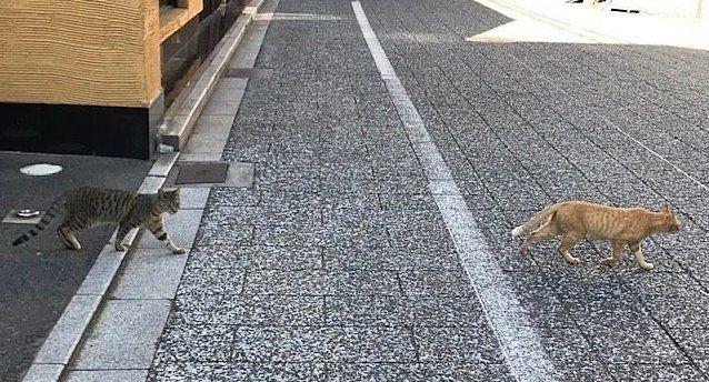 岡山駅西口,奉還町の猫たち,駅近ラーメン店,出汁がらを与えられて毛並みのよいネコたち