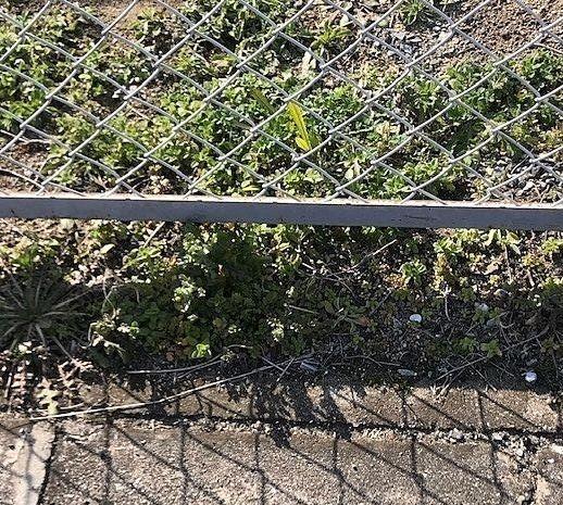 春の除草対策始まる