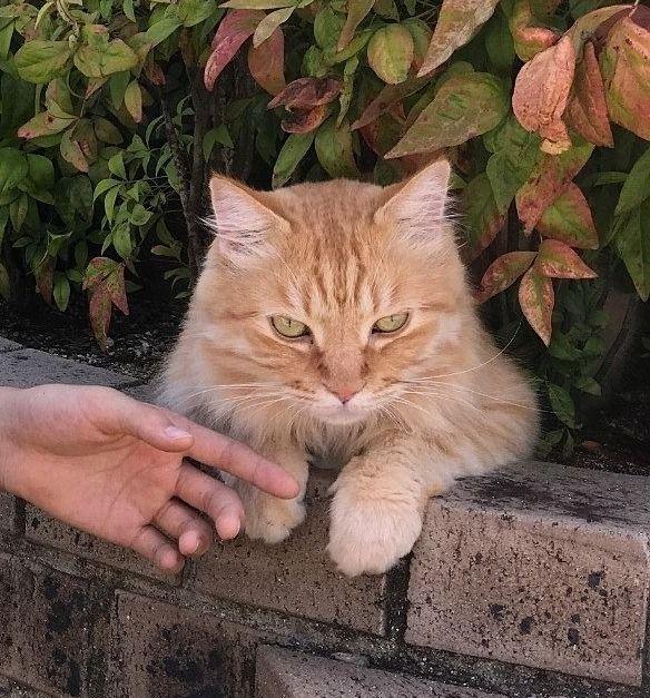 愛猫と一緒に住める物件