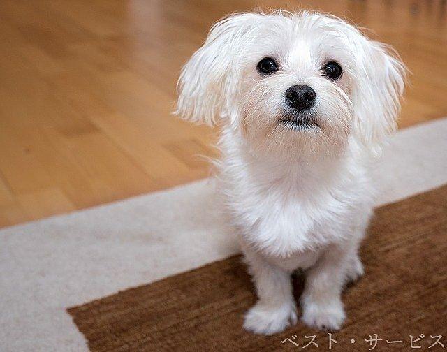 ペット(小型犬)OKのアパート紹介!
