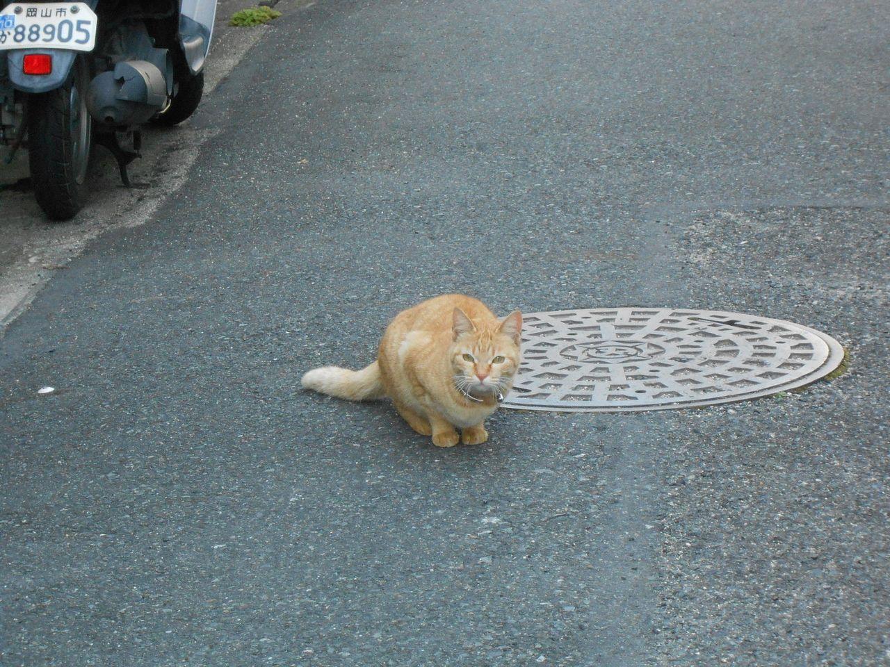 猫の糞は取り去るのが基本です 土ごと削って捨ててしまいます