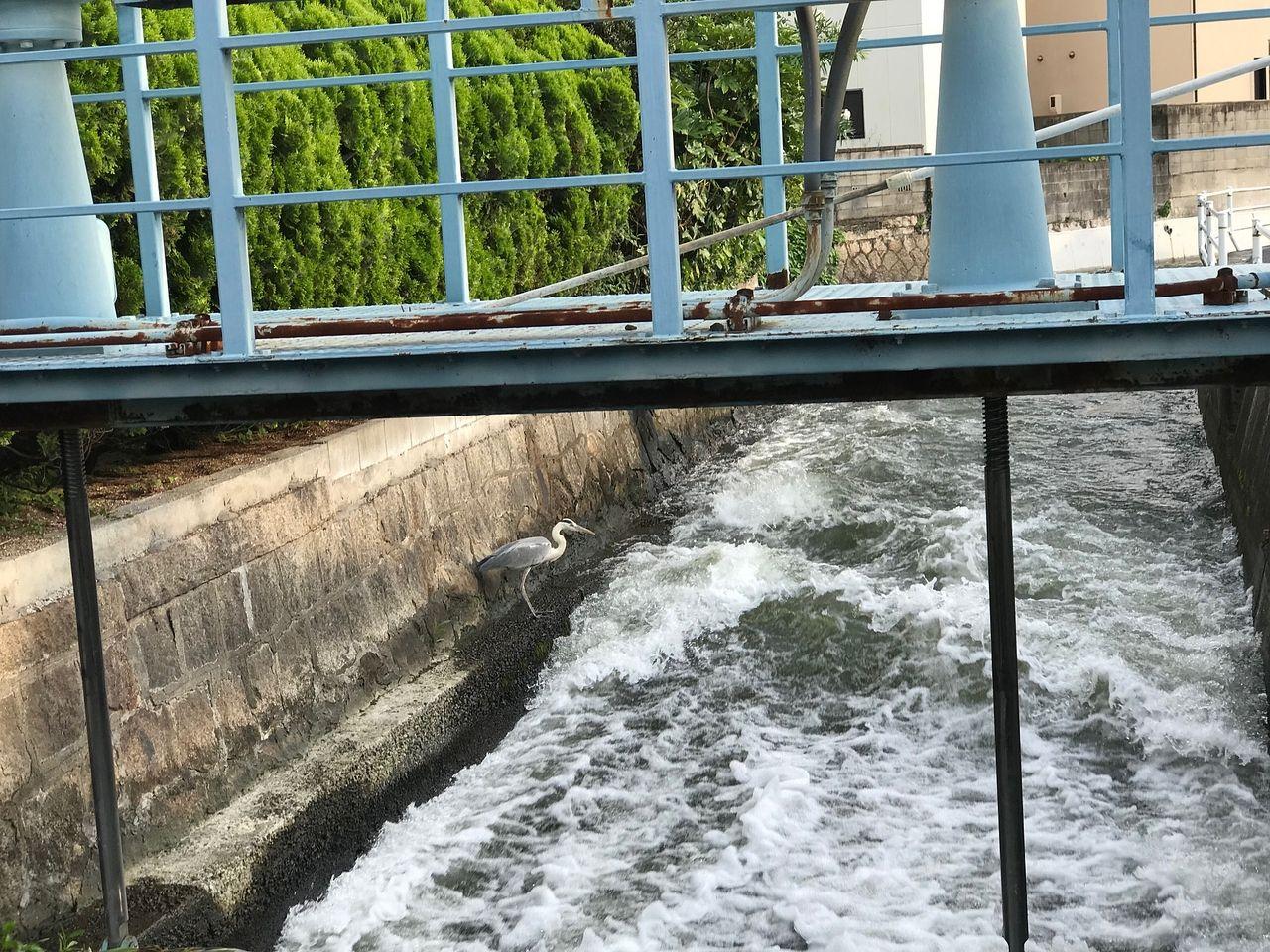 涼を生む水辺の風景--梅雨どき--