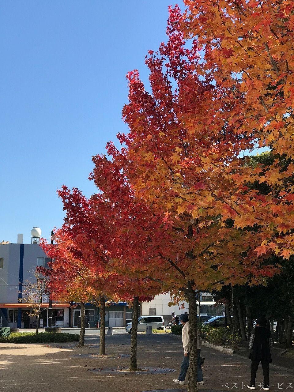 岡山県総合グラウンドの紅葉も見ごろ