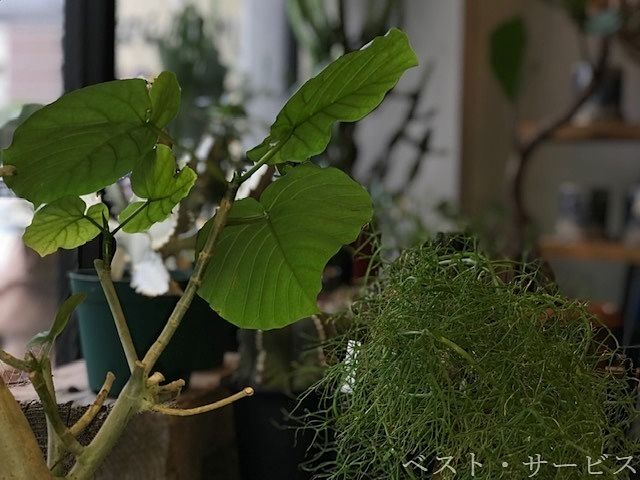 植物と暮らす・TUNAGU LIFE