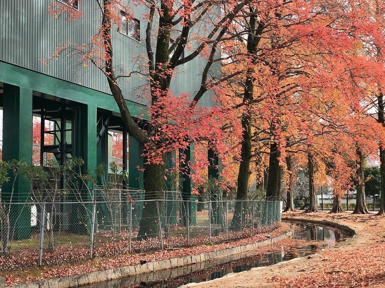 紅葉は見ごろを過ぎてもなお美しい