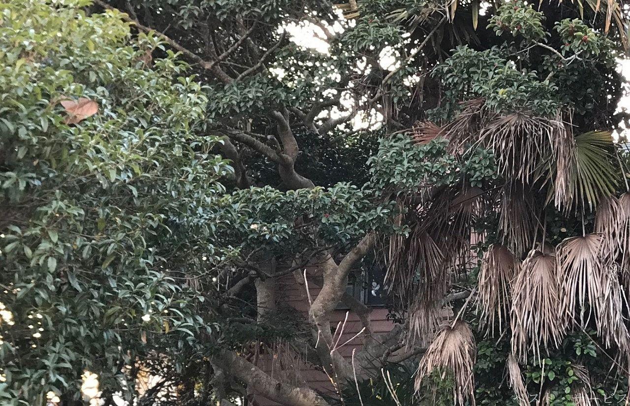 枝が家屋に達して物理的に壊したり、根が張ることで床が傾いたりします